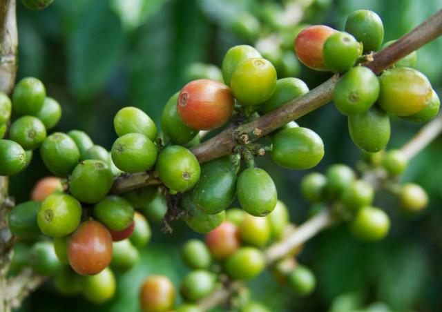 原産地で違うコーヒーの味わいと特徴